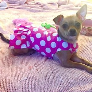 DOG CLOTHES Pink Polka Dot Dress XXS NWT Pc Dog